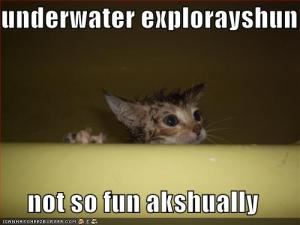 funny-pictures-cat-decides-underwater-exploration-is-not-so-fun