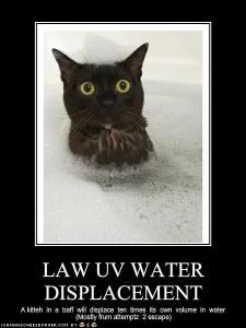 funny-pictures-cat-explains-law-of-water-displacement